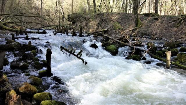1 maja 2020 r. przypada 30. rocznica założenia Drawieńskiego Parku Narodowego (położony jest na terenie Lubuskiego, Zachodniopomorskiego i Wielkopolskiego)