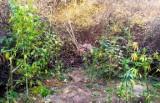Mężczyzna w torbie miał kilogram marihuany, a w lesie koło Krosna Odrzańskiego uprawę konopi