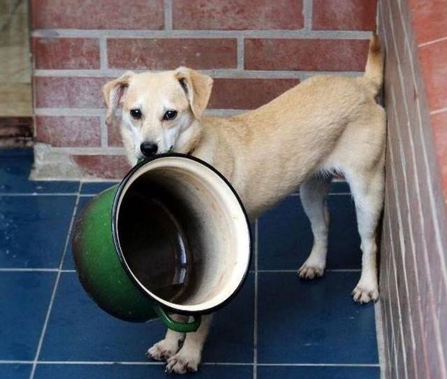 Schroniskowe psy apelują: nie zostawiajcie nas bez wody.