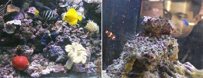 To rafa koralowa nie z Morza Śródziemnego, a z akwarium pana Dariusza.