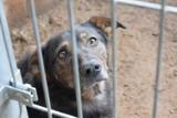 """Uratowane przez gdyńskie """"Ciapkowo"""" psy z Radys szukają nowego domu"""