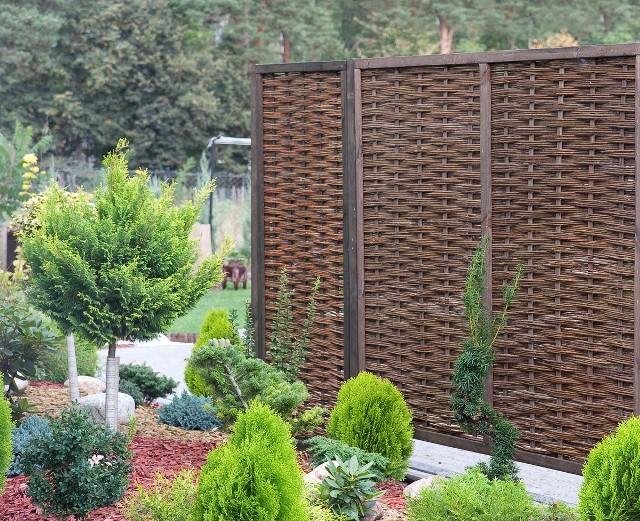 Płot wiklinowy w ogrodzie Płot wiklinowy może być dekoracją ogrodu a jednocześnie dla roślin osłoną od wiatru.