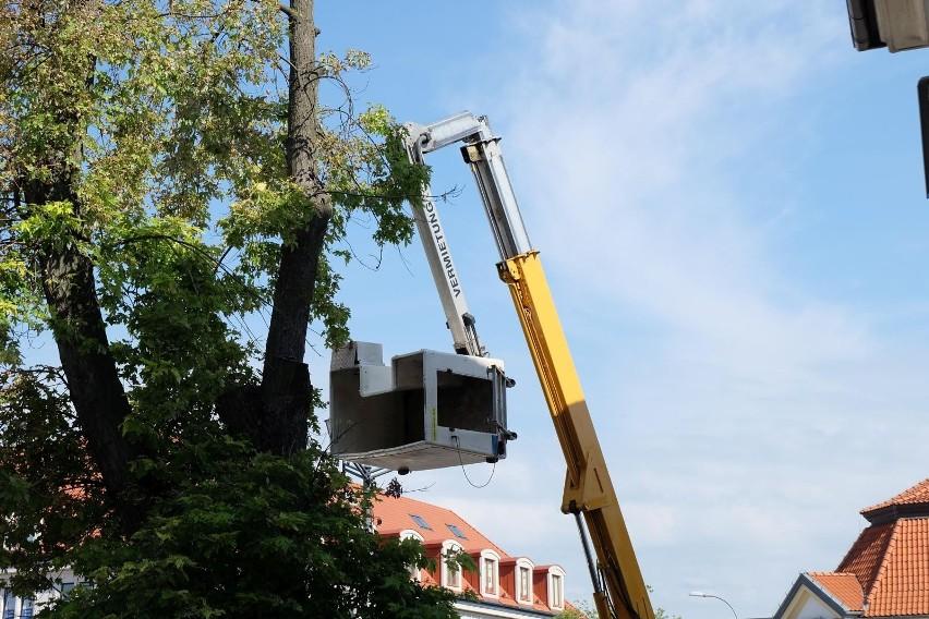 Białystok. Ruszył proces ws. śmiertelnego wypadku podczas wycinki drzew przy Rynku Kościuszki (zdjęcia)