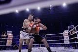 Adamek znokautował Abella! RETRANSMISJA Polsat Boxing Night ZDJĘCIA + WIDEO Adamek - Abell ONLINE Walka ONLINE NOC ZEMSTY