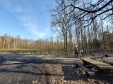 Duża wycinka drzew w lesie w Ochojcu w Katowicach. Nadleśnictwo tłumaczy decyzję o cięciu drzew