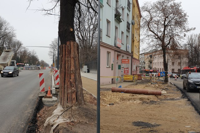 Po jednym drzewie zostanie wyciętym na ul. Lipowej oraz Al. Racławickich