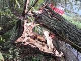 Wichura w Małopolsce. Porywisty wiatr narobił sporo szkód. Połamane drzewa, uszkodzone dachy, zerwane linie energetyczne