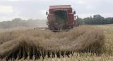 Wypadki w rolnictwie. W czasie prac polowych giną dzieci - alarmuje prokuratura