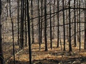 Ciało zostało znalezione w lesie. Okoliczności śmierci mężczyzny wyjaśni śledztwo.