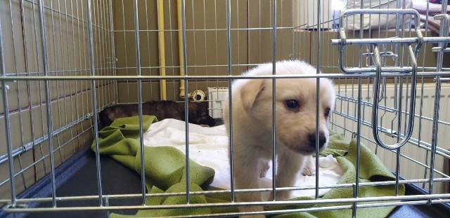 Małe i duże pieski czekają na nowych właścicieli. Informacje o adopcji: www.schronisko-lodz.pl.