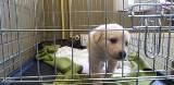 Znów więcej psów w schronisku, pilnie potrzebne koce dla szczeniąt