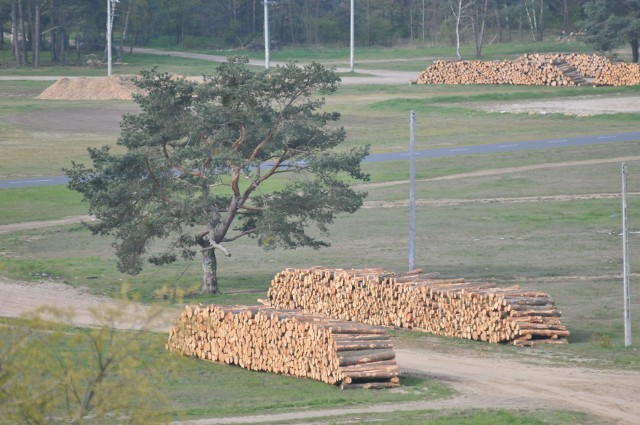 2.084 - tyle drzew zostanie wyciętych na terenie, sąsiadującym z miejscem, gdzie co roku odbywa się Przystanek Woodstock w Kostrzynie. Wycinka już trwa. Setki drzew pocięto w metry i ułożono w różnych miejscach woodstockowego pola. W okolicach miejsca, gdzie rozkładana jest duża scena, składowane są tony drewnianych wiórów.Drzewa wycinano m. in. w lesie u stóp wzgórza, na którym odbywa się co roku Akademia Sztuk Przepięknych. Wycinane są też setki drzew w lesie za miejscem, gdzie na Woodstocku rozstawiane są stoiska gastronomiczne. Piły pracują też w lesie, który co roku był zapleczem dużej sceny.Drzewa wycina wyłoniona w organizowanym przez miasto przetargu firma. Wycinka prowadzona jest na prośbę nadleśnictwa. Jak informuje kostrzyński magistrat, leśnicy polecili wycięcie drzew, które zaatakowane zostały przez kornika ostrozębnego. Na wycinkę zgodę wydało starostwo. Jak mówią urzędnicy, chore drzewa musiały zostać wycięte, żeby oszczędzić pozostałą część lasu.Przed tym, jak drzewa zostały wycięte, gołym okiem było widać, że wiele z nich jest chorych. Były suche, a ich igły przybrały kolor brązowy. Drzewa, na których zostaną zauważone gniazda ptaków, zostaną wycięte w późniejszym terminie.  Przypomnijmy, pod koniec marca drzewa poszły pod topór na jednej z prywatnych działek, znajdujących się na terenie Przystanku Woodstock. Pisaliśmy o tym tutaj: Wycinka drzew na terenie Przystanku Woodstock. Wiadomo, że będą kolejneCzytaj więcej o Kostrzynie nad Odrą:  Kostrzyn nad Odrą - informacje, wydarzenia, artukułyWszystkie informacje o Przystanku Woodstock 2017 w Kostrzynie nad Odrą:  Przystanek Woodstock 2017: koncerty, zdjęcia, filmy, informacje