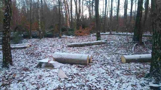 Pracownicy nadleśnictwa z Kolbud wycięli drzewa na prywatnych działkach