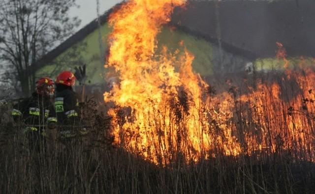 Wypalanie traw nie użyźni gleby, ani nie zlikwiduje chwastów. Za to niszczy ziemię, zagraża budynkom i zabija ludzi.