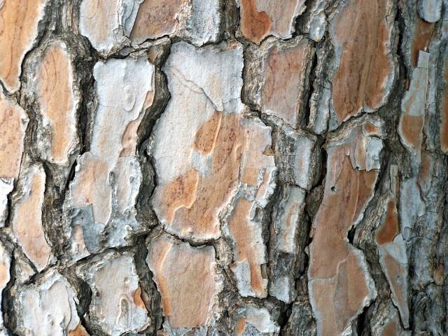 Kora dębu (łac. Quercus cortex) jest wysuszoną korą z kilku gatunków dębów, które występują w Europie. Surowiec zbiera się wczesną wiosną, przed pojawieniem się na drzewach pierwszych liści. Korę dębu pozyskuje się z gałązek lub pnia drzewa.