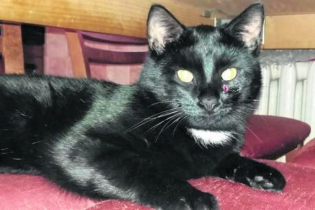 Kot pana Szymona został trafiony w pyszczek, między okiem i nosem. Na szczęście dochodzi już do siebie.