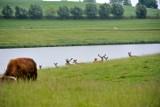 Gołdap. Między tężniami a safari