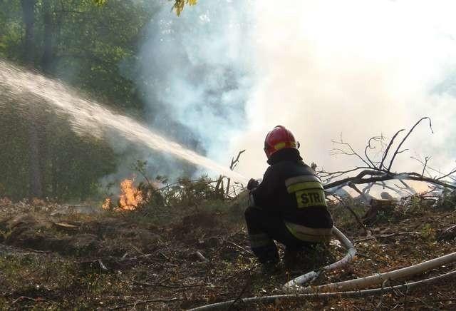 Strażacy walczący z ogniem w Lesie Komunalnym