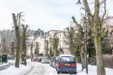 Niszczenie drzew czy pielęgnacja? Ogłowione drzewa w gdańskiej Oliwie! Jest wniosek o ukaranie miasta przez marszałka województwa