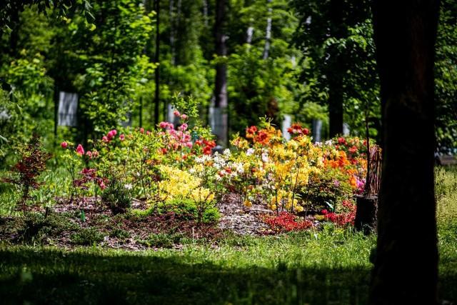 Ogród botaniczny w Radzionkowie. Wstęp bezpłatny.Zobacz kolejne zdjęcia. Przesuwaj zdjęcia w prawo - naciśnij strzałkę lub przycisk NASTĘPNE