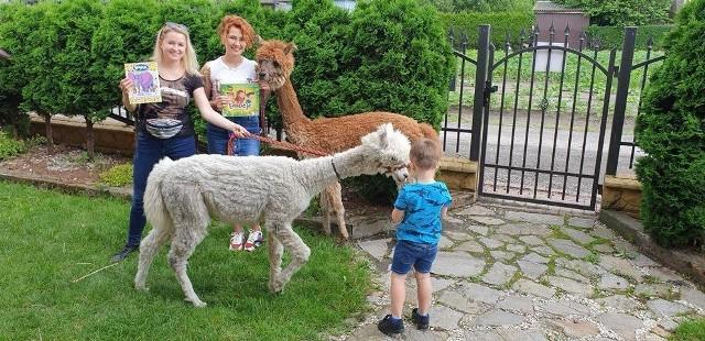 Jedną z atrakcji niedzielnego festynu na radomskich Borkach będzie wizyta alpak z Rancza Emocji z Racja Szlacheckiego.
