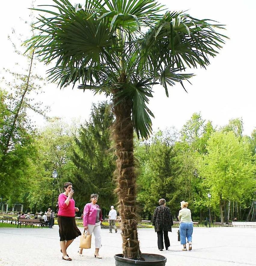 Czy w nowej części Solanek też będą rosły egzotyczne palmy?