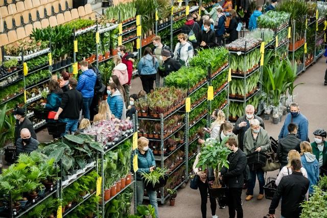 W hali przy ulicy Toruńskiej 59 w weekend 8-9 maja czeka prawdziwy raj dla miłośników rozmaitych, popularnych i tych unikatowych roślin doniczkowych. Każdy może znaleźć coś dla siebie