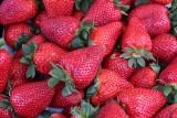 Ceny truskawek są wciąż wysokie. Producenci tych owoców mają problemy ze zbiorami m.in. z ludźmi do pracy. Proponują sprzedaż z krzaczka