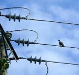 Wczoraj ponad półtora tysiąca mieszkańców Gorzowa, Kłodawy i Chwalęcic nie miała prądu