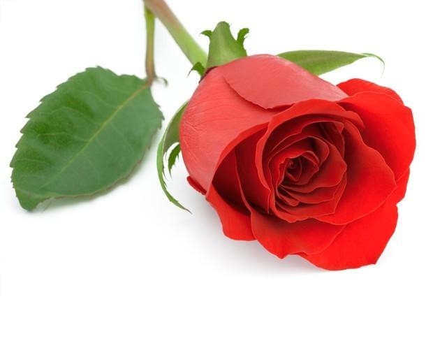 Kwiaty Na Walentynki 2014 Jakie Kwiaty Podarować Na