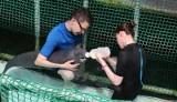 We wrocławskim zoo urodził się manat. To samiczka [FILM, ZDJĘCIA]