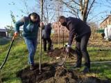 W Katowicach ruszyło sadzenie 312 drzew z drugiej edycji projektu wCOP drzewo. Miejsca nowych nasadzeń wskazali mieszkańcy
