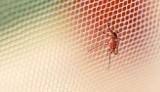 Natrętne owady w domu – jak się przed nimi bronić?