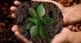 Reagują na dotyk, dźwięk, obecność człowieka. Mowa roślin istnieje. SGGW chce ją wykorzystać dla rolnictwa
