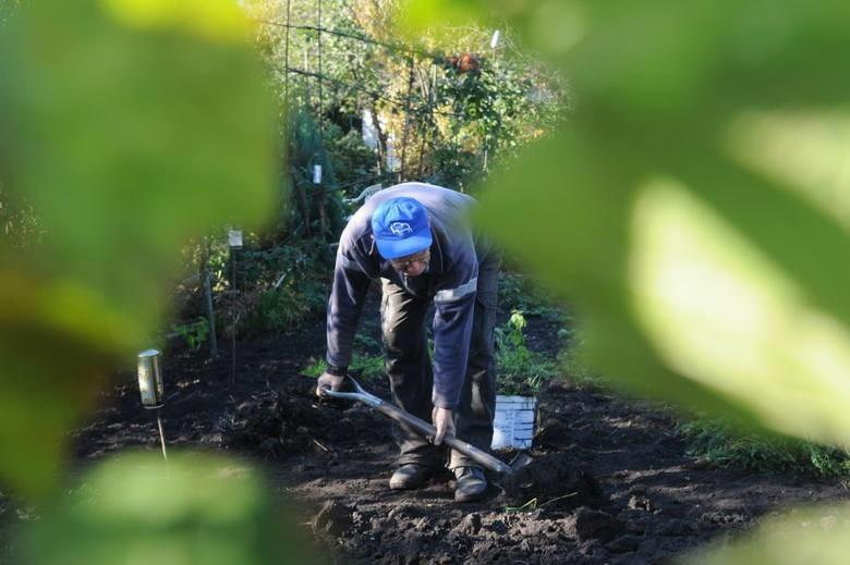Działki ogrodowe w czasie pandemii to prawdziwy luksus dla...