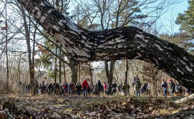 Toruń. Marsze dla zdrowia 50+ w lesie robią furorę