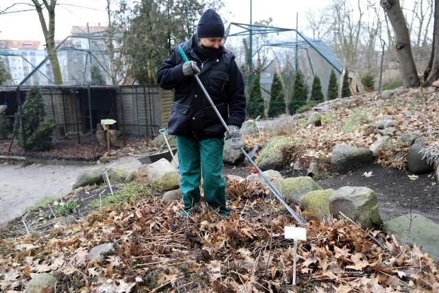 MARZECNa razie w niektórych miejscach w Polsce leży śnieg, ale jeśli pogoda się poprawi,  zdejmujemy z roślin włókninę. Przygotowujemy również grządki do siewu warzyw i kwiatów, nawożąc je kompostem. Możemy również przycinać krzewy i drzewka owocowe: grusze, jabłonie, śliwy. To także dobra pora na sadzenie nowych drzewek owocowych.  Przycinamy również róże oraz hortensje drzewiaste. Nawozimy zimozielone krzewy. Wygrabiamy liście z trawnika. W drugiej połowie marca wysiewamy nasiona marchwi, pietruszki, jarmużu, szpinaku. Sadzimy cebulę dymkę i czosnek.