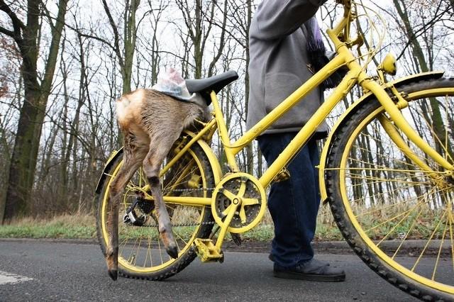 Wiózł rowerem martwą sarnę
