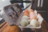 W tej sieci handlowej już nie kupisz jajek z chowu klatkowego
