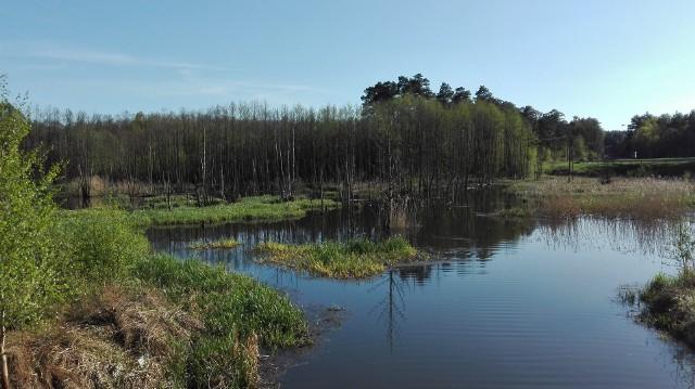 Zbiornik retencyjny w Czerwieńsku to doskonałe miejsce do spacerów i weekendowego wypoczynku