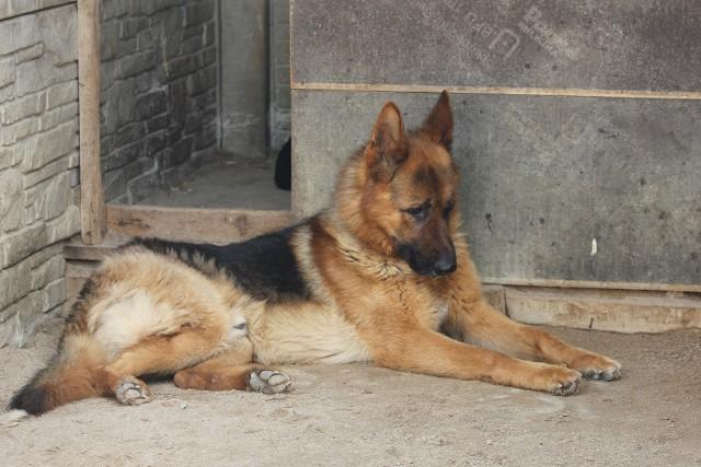 Zwierzęta w schronisku w Radysach przeszły piekło. Dziś czekają na miłość człowieka i bezpieczny dom.