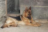 Uratuj psa z Radys. Możliwe są pierwsze adopcje. Zobacz zdjęcia psów czekających na nowy dom! (ZDJĘCIA)