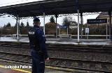 Dramatyczne chwile na stacji PKP w Świebodzinie. Pijany mężczyzna spadł z peronu, zbliżał się pociąg