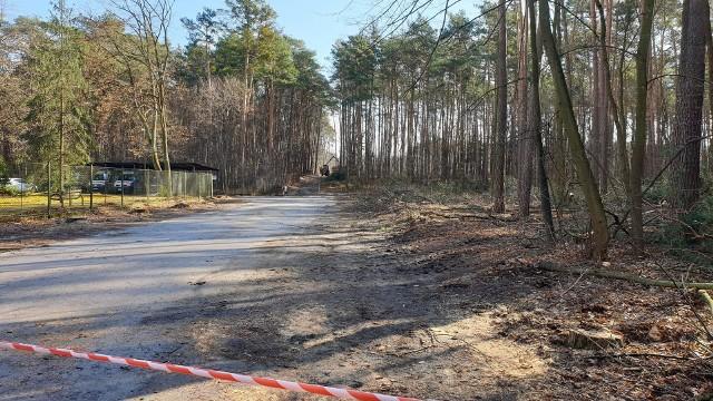Ulica Marii Skłodowskiej-Curie przy szpitalu w Nowej Dębie zostanie przebudowana. Przy odcinku wycięto już drzewa.