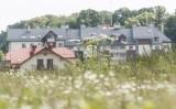 Walka z barszczem Sosnowskiego w Poznaniu - miasto chce usuwać rośliny z prywatnych działek