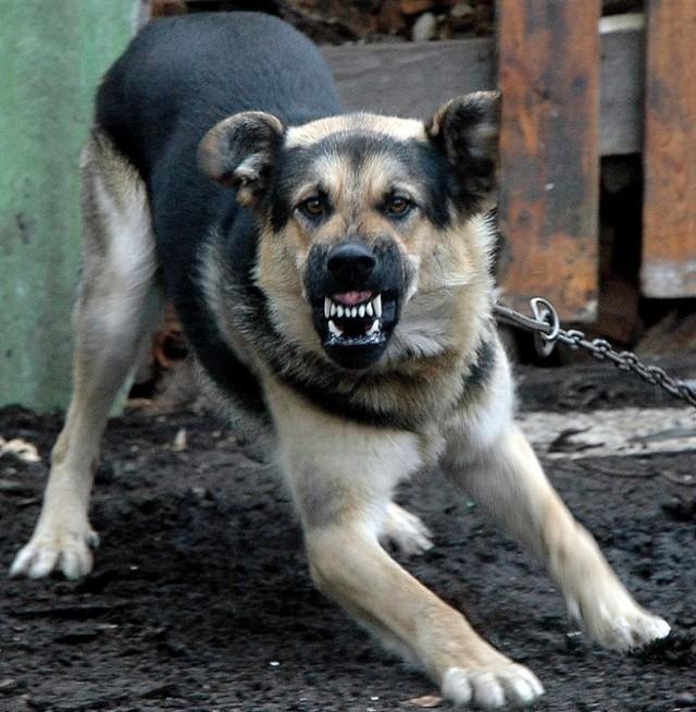 Nie obyło się bez tragedii. W 2002 r. pies sąsiadów zagryzł 5-letnią dziewczynkę z Sarbinowa. Dwa lata później własny pies zagryzł 4-letniego chłopca, a własny koń - 24-latka. Pies sąsiadów zagryzł zaś 6-letnią dziewczynkę.