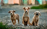 """Malborski Reks przypomina: """"Nie jesteśmy schroniskiem!"""". Wolontariusze nie są w stanie przyjmować wszystkich zwierząt. Dostają groźby"""