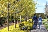Ogrody Kapias w majowej odsłonie wyglądają cudownie. Turyści przyjeżdżają jak do uzdrowiska