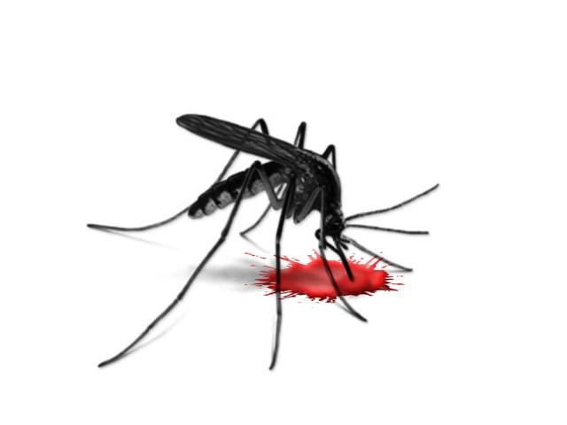 Krwią odżywiają się wyłącznie komarzyce