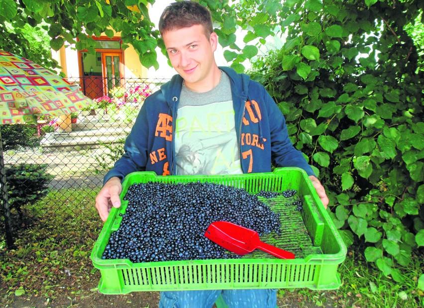 Józef Foks uważa, że sprzedaż owoców w skupach do przetwórstwa się nie opłaca, dlatego woli handlować na rynku. Dzisiaj cena porzeczek na bazarze wynosiła 3 zł za kg, borówki - 12 zł za kg